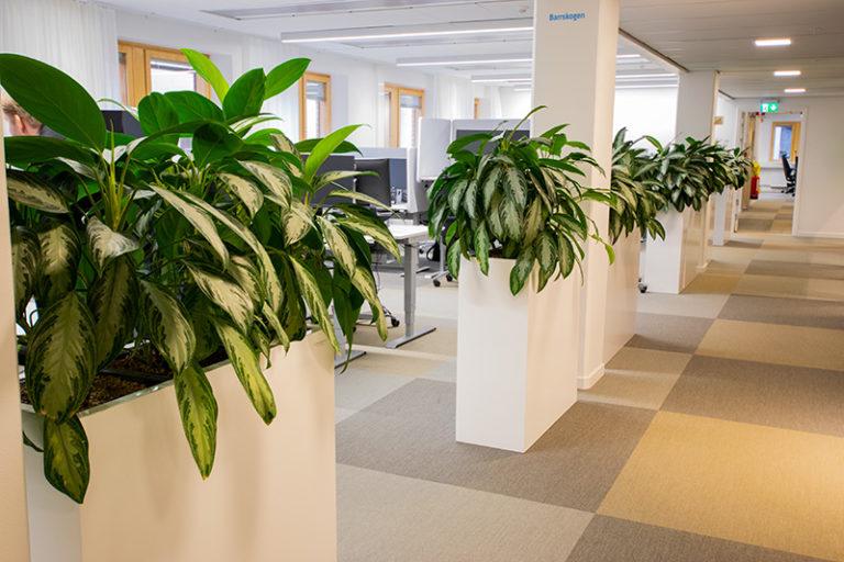 Rumsavdelare med växter till företaget