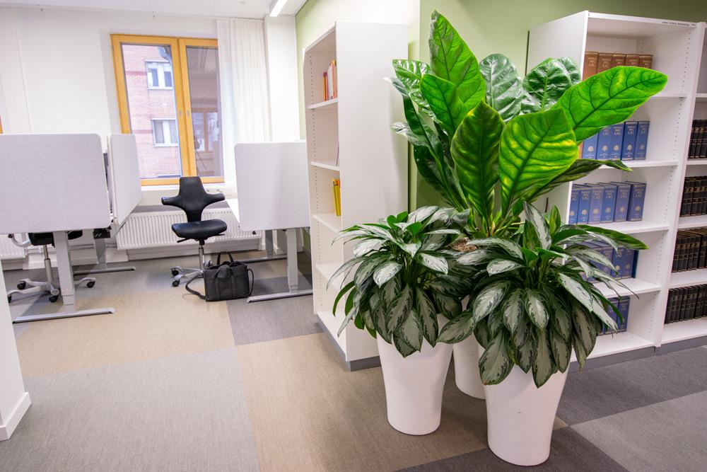 Kontorsväxter / företagsväxter med trygga serviceavtal