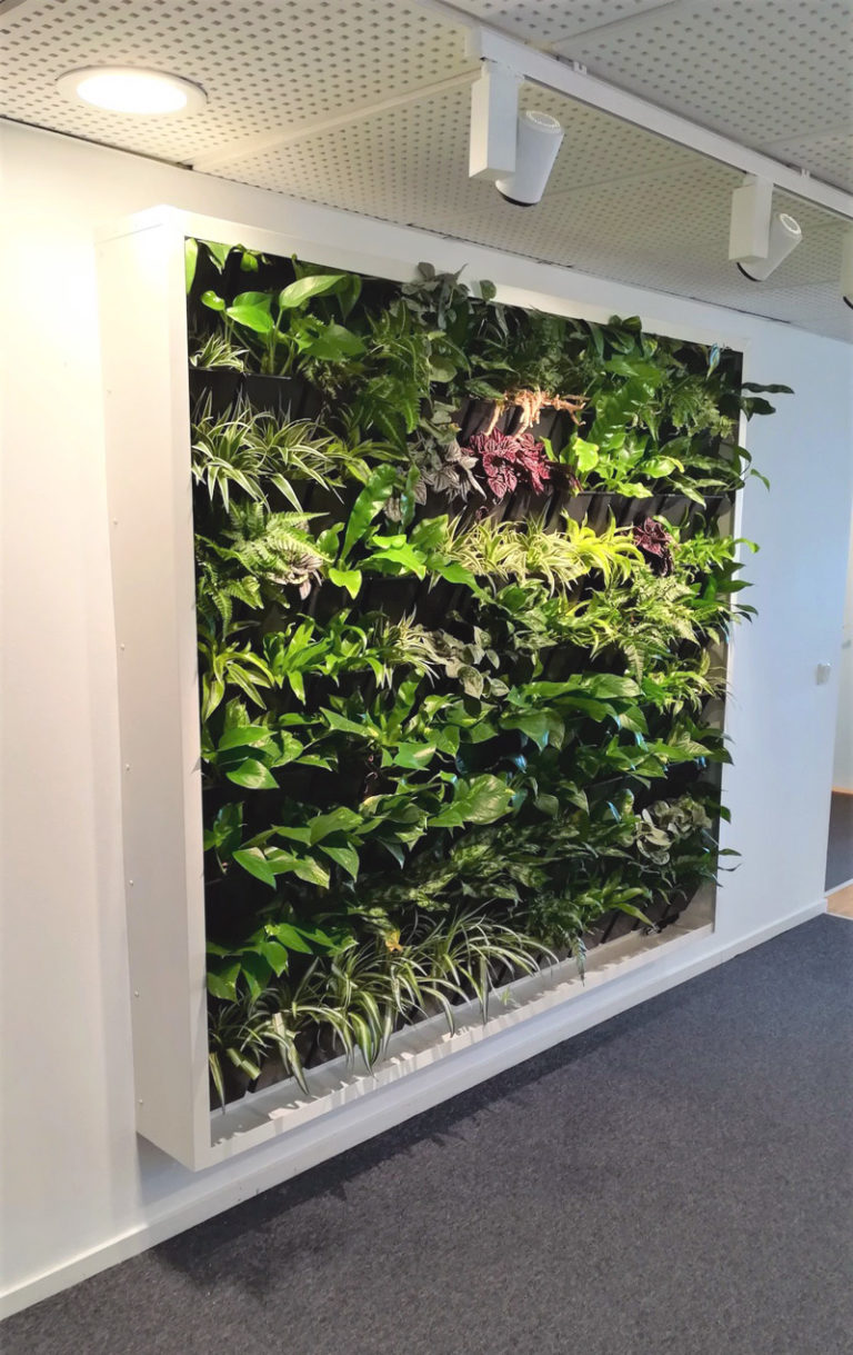 Hyr växtväggar till företaget