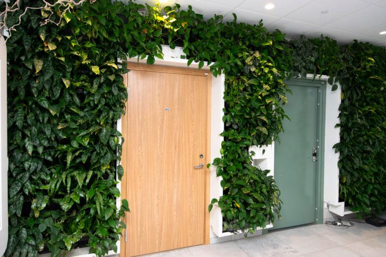 Växtväggar och växttavlor till företaget