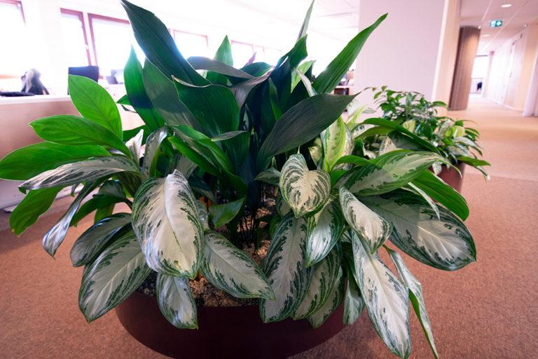 Krukor och växter till företag