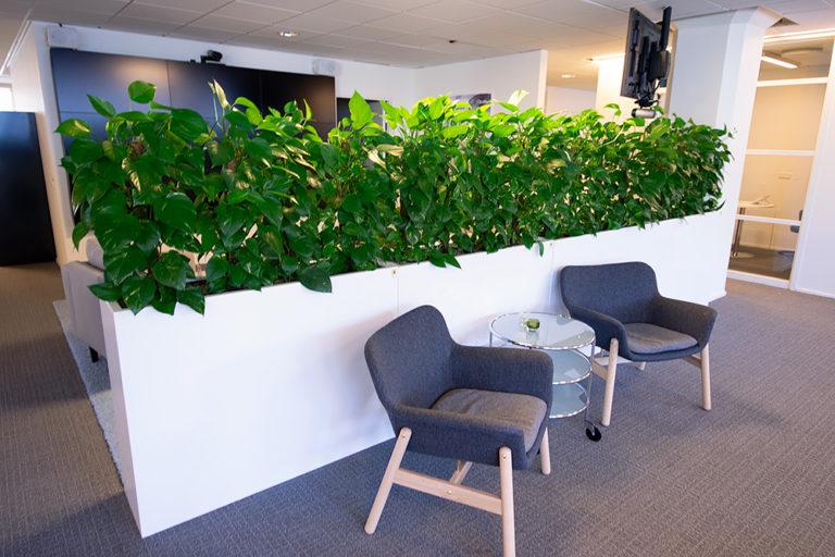 Växtskärmar som rumsavdelare