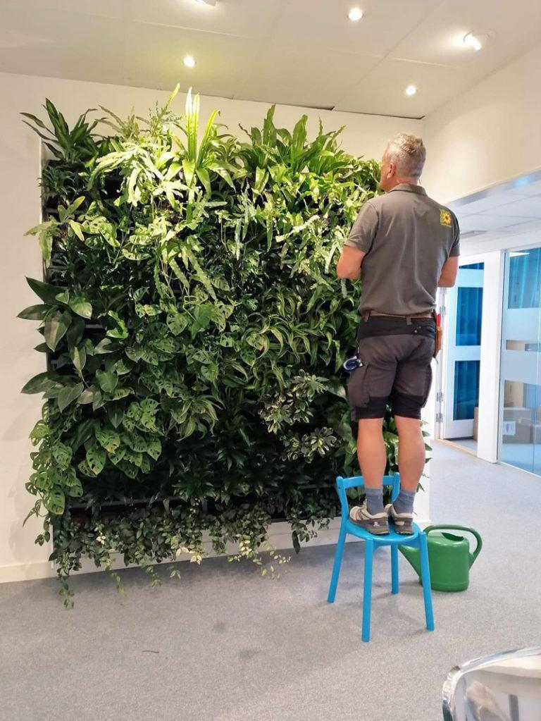 Benny bygger växtvägg