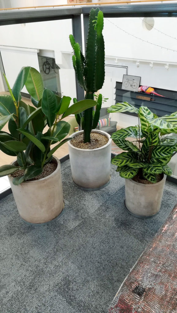 Köp eller hyr krukväxter