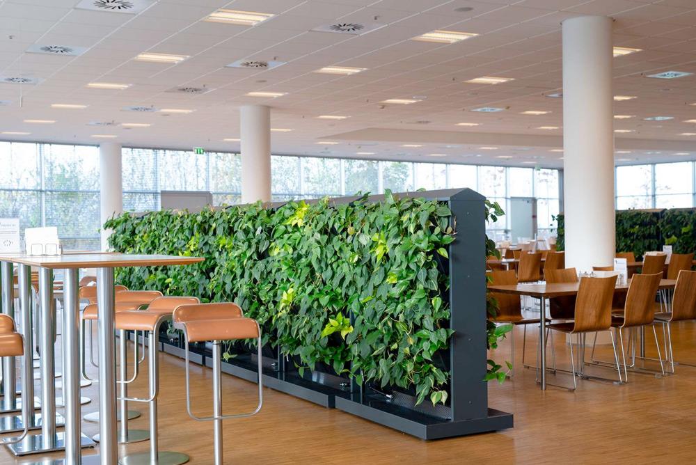 Växtskärmar till kontoret