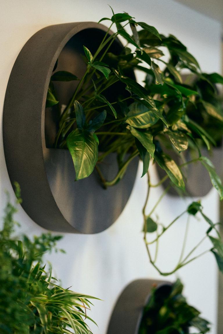 Växttavlor skapar ett bestående intryck