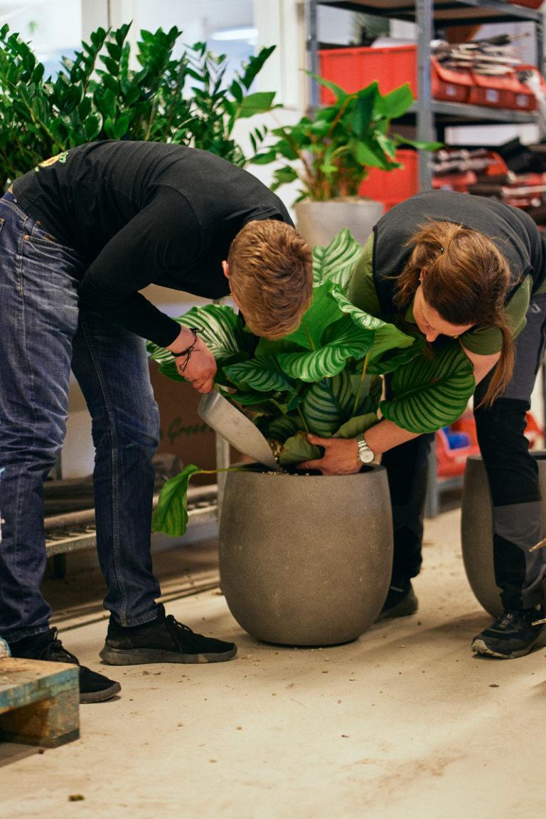 Växtvård AB tar hand om dina växter