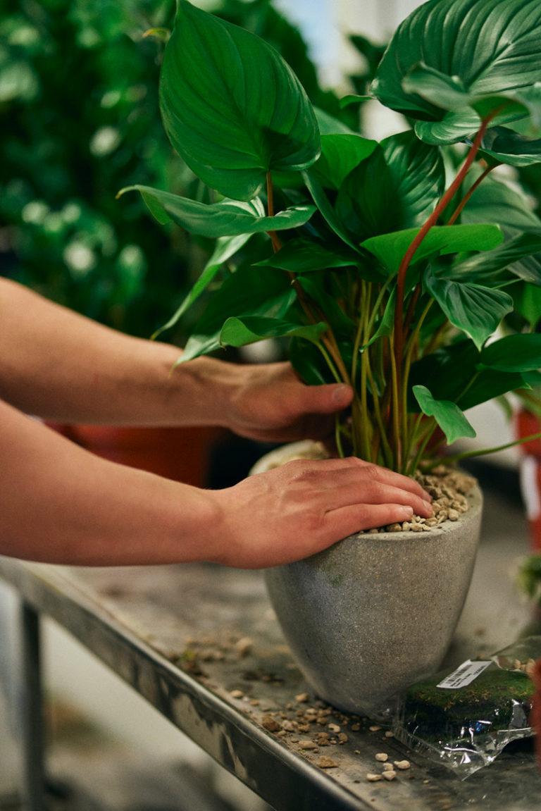 Växtvårdsavtal med garanti
