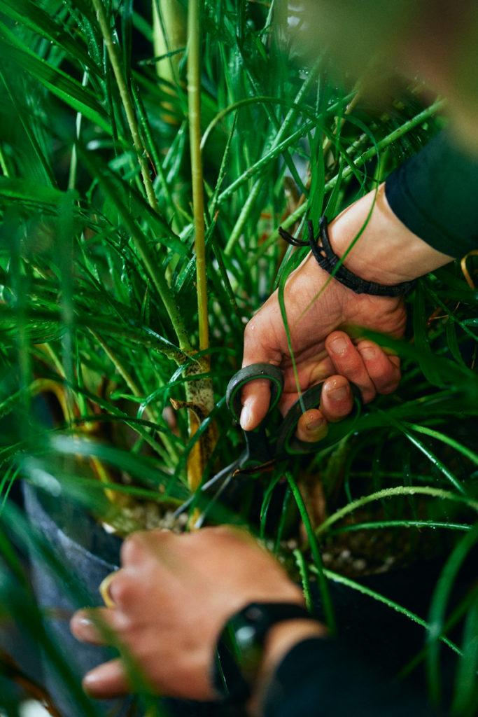 Service och hyresavtal av växter